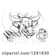 Clipart Of A Black And White Mad Aggressive Bull Monster Clawing Through A Wall Royalty Free Vector Illustration