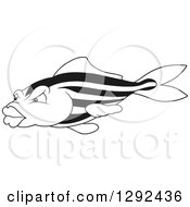 Black And White Striped Fish With Big Lips