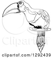 Grayscale Sketched Toucan Perched