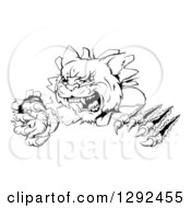 Clipart Of A Black And White Wild Cat Slashing Through A Wall Royalty Free Vector Illustration