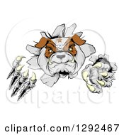 Clipart Of A Tough Bulldog Monster Clawing Through A Wall Royalty Free Vector Illustration by AtStockIllustration