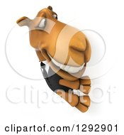 Clipart Of A 3d Happy Business Camel Smiling And Looking Around A Sign Royalty Free Illustration
