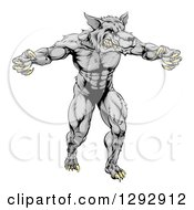 Clipart Of A Muscular Aggressive Gray Wolf Man Attacking With Claws Out Royalty Free Vector Illustration