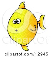 Shocked Yellow Angelfish Swimming Underwater Clipart Graphic Illustration