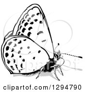 Clipart Of A Black And White Butterfly And Gray Shadow Facing Right Royalty Free Vector Illustration