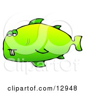 Green Buck Toothed Fish Clipart Graphic Illustration