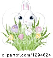 Cute White Easter Bunny Looking Over Spring Crocus Flowers