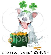 Clipart Of A Cute White And Gray Pitbull St Patricks Day Dog Wearing A Shamrock Headband By A Pot Of Gold Royalty Free Vector Illustration