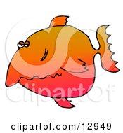 Disgruntled Orange Fish