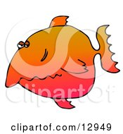 Disgruntled Orange Fish