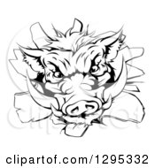 Clipart Of A Black And White Fierce Boar Head Breaking Through A Wall Royalty Free Vector Illustration