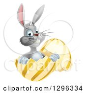 Clipart Of A Happy Gray Easter Bunny Sitting In A Gold And Yellow Egg Shell Royalty Free Vector Illustration by AtStockIllustration