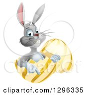 Clipart Of A Happy Gray Easter Bunny Sitting And Pointing In A Gold And Yellow Egg Shell Royalty Free Vector Illustration