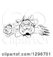 Clipart Of A Black And White Tough Bulldog Monster Clawing Through A Wall Royalty Free Vector Illustration