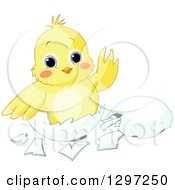 Cute Animal Clipart Of An Adorable Baby Chick Waving In An Egg Shell Royalty Free Vector Illustration by Pushkin
