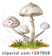 Clipart Of White Spotted Mushrooms Royalty Free Vector Illustration by merlinul