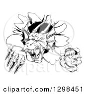 Clipart Of A Black And White Vicious Dragon Mascot Head Shredding Through A Wall Royalty Free Vector Illustration