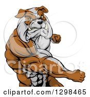 Clipart Of A Snarling Muscular Bulldog Man Punching Royalty Free Vector Illustration by AtStockIllustration
