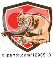 Clipart Of A Retro Woodcut Vicious Grizzly Bear Emerging From A Brown White And Red Shield Royalty Free Vector Illustration
