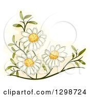 Clipart Of Medicinal Chamomile Flowers Royalty Free Vector Illustration