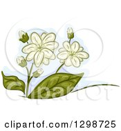 Clipart Of Jasmine Flowers And Leaves Royalty Free Vector Illustration