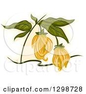 Clipart Of A Ylang Ylang Plant Royalty Free Vector Illustration