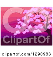 Clipart Of A Blossoming Cherry Tree Against A Pink And Purple Sunset Royalty Free Vector Illustration