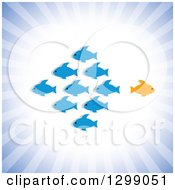 Clipart Of A Different Orange Fish Going In A Different Direction Than A School Of Blue Fish Over Rays Royalty Free Vector Illustration
