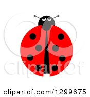 Clipart Of A View Down On A Ladybug On White Royalty Free Illustration