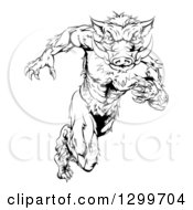 Clipart Of A Black And White Aggressive Sprinting Muscular Boar Man Royalty Free Vector Illustration