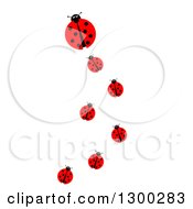 Clipart Of A Lady Bug Family Trail On White Royalty Free Illustration by oboy