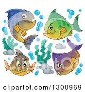 Clipart Of A Group Of Carnivorous Piranha Fish With Bubbles And Aquatic Plants Royalty Free Vector Illustration