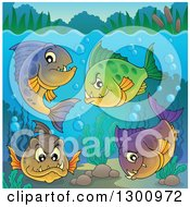 Clipart Of A Group Of Carnivorous Piranha Fish Underwater With Visible Surface Royalty Free Vector Illustration