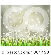 Clipart Of A Spring Time Background Of Daisy Flowers And Grass Over Flares 4 Royalty Free Vector Illustration by vectorace