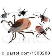 Clipart Of Castor Bean Ticks Royalty Free Vector Illustration