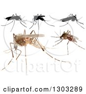 Clipart Of Mosquitoes Royalty Free Vector Illustration by dero