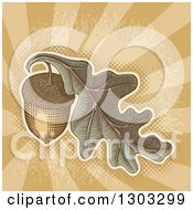 Engraved Acorn And Oak Leaf Over Grungy Brown Rays And Halftone