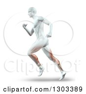 Clipart Of A 3d Anatomical White Male Running With Visible Leg Muscles On White Royalty Free Illustration