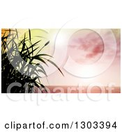 3d Grassy Plant Silhouetted Against A Pink Sky With Sun Flares And The Ocean