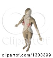 Clipart Of A 3d Anatomical Woman With Visible Internal Breast Makeup On White Royalty Free Illustration