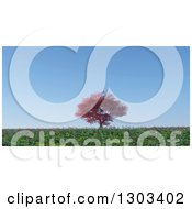 3d Large Autumn Maple Tree In A Flat Grassy And Poppy Meadow