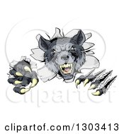 Clipart Of A Ferocious Gray Wolf Slashing And Breaking Through A Wall Royalty Free Vector Illustration by AtStockIllustration