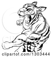 Clipart Of A Black And White Vicious Roaring Muscular Tiger Man Punching Royalty Free Vector Illustration