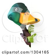 Clipart Of A 3d Gardener Mallard Drake Duck Pointing Around A Sign Royalty Free Illustration