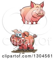 Clipart Of Cartoon Happy Muddy And Clean Pigs Royalty Free Vector Illustration