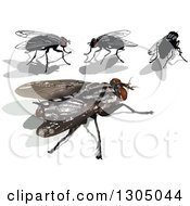 Clipart Of House Flies And Shadows Royalty Free Vector Illustration