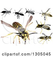Clipart Of Wasps Royalty Free Vector Illustration