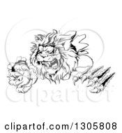 Clipart Of A Black And White Roaring Lion Mascot Shredding Through A Wall Royalty Free Vector Illustration