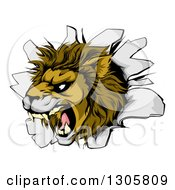 Clipart Of A Fierce Roaring Lion Mascot Head Breaking Through A Wall Royalty Free Vector Illustration