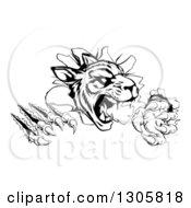 Black And White Vicious Tiger Mascot Slashing Through A Wall